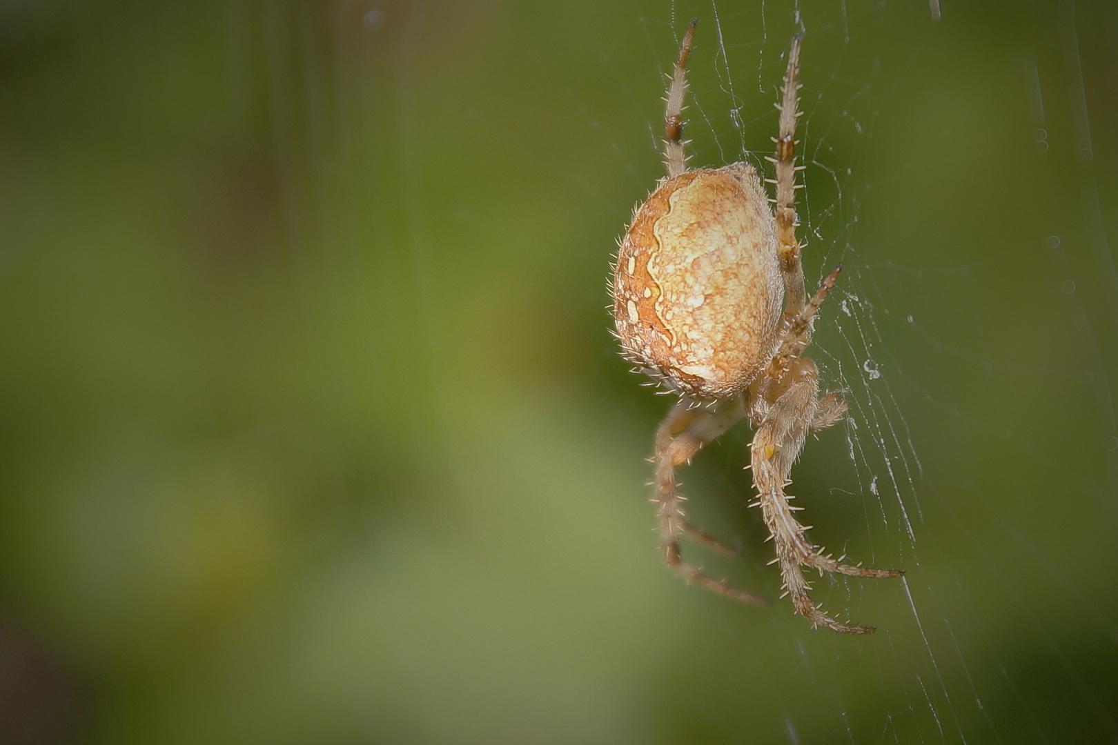 Arachnophobie