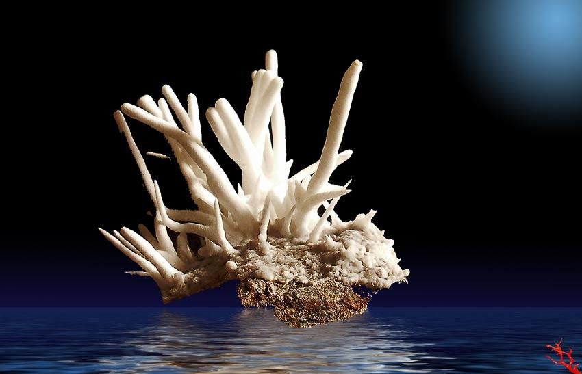 Aragonite coralloide - loc. Caprazoppa- Liguria
