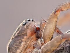 Araignée 2 - detail