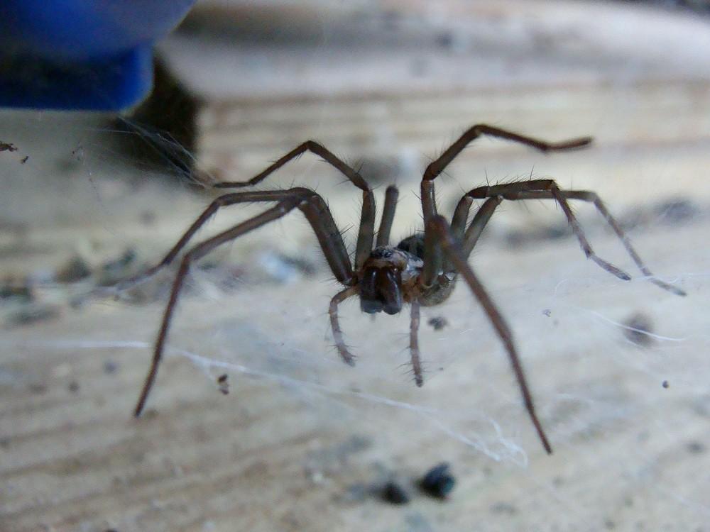 araignée beurk