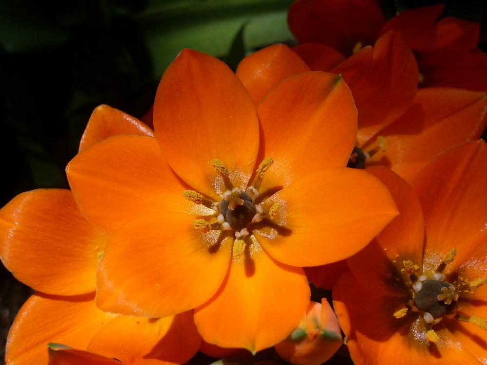 arancione!!!!!!!!