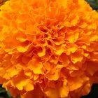 arancione naturale