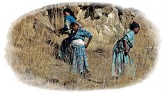 arbeitende Frauen auf dem Feld..................