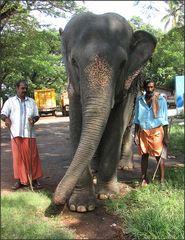 Arbeitselefant