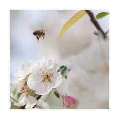 Arbeitsplatz Apfelbaum