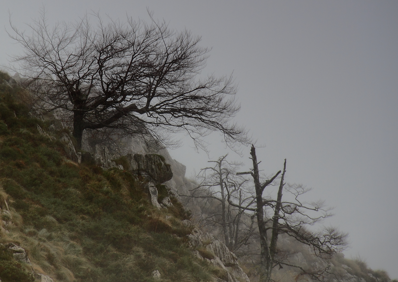 arbol en la niebla