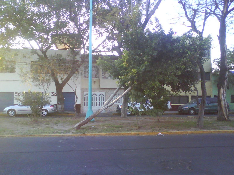 árbol que crece torcido...