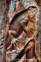 Arbol tallado - Iguana