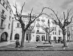 Arboles danzantes - Dancing trees