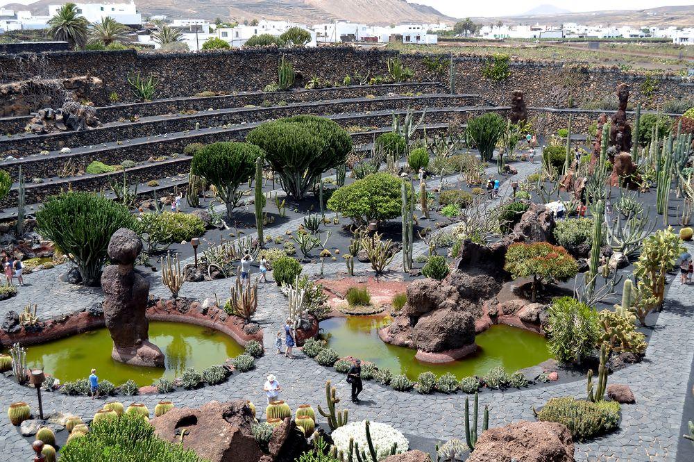 Arboles del desierto jardin de cactus imagen foto for Jardin del desierto