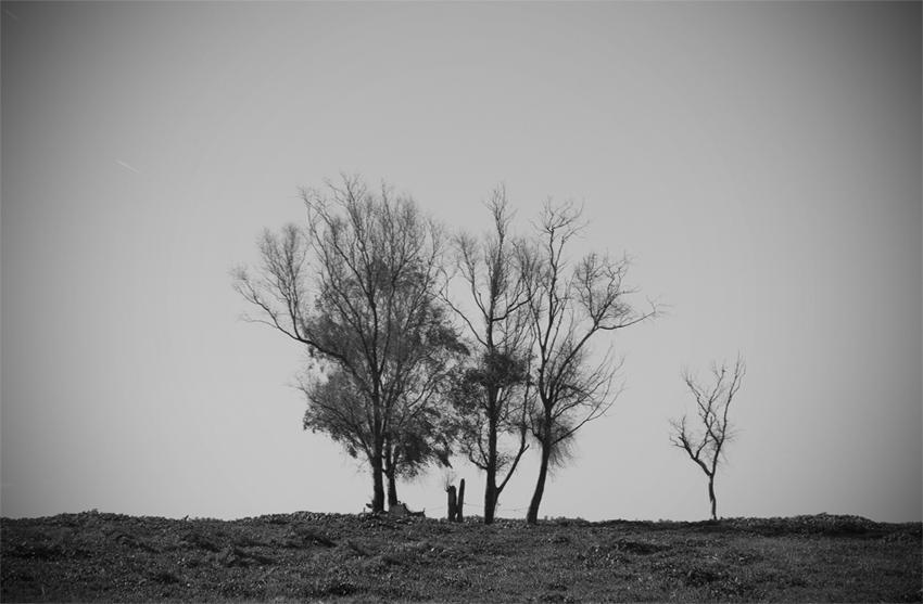 Arboles solos