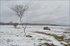 Arbolito nevado