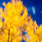 Arboretum, automne, Chevreloup, flou