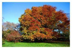 Arboretum Ellerhoop (14)