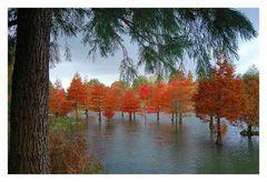 Arboretum Ellerhoop (6)