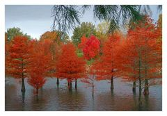 Arboretum Ellerhoop (7)