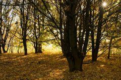 Arboretum Eschborn 2