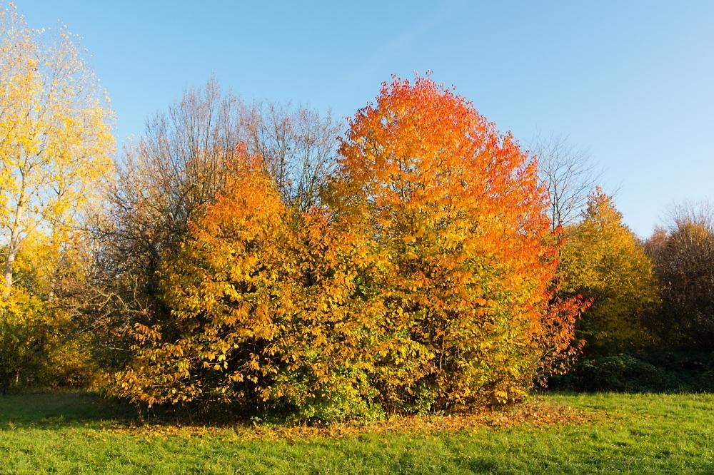 Arboretum Eschborn 3