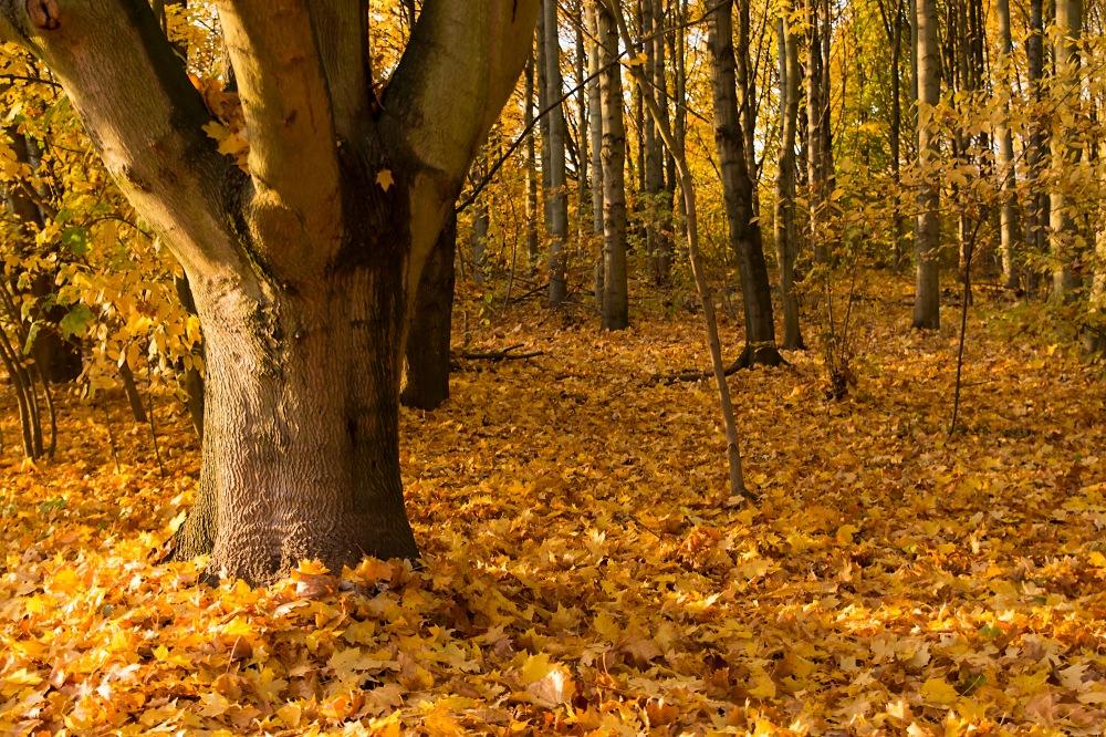 Arboretum Eschborn 7