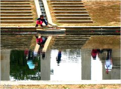 Arboretum Reflections - A Washington Moment