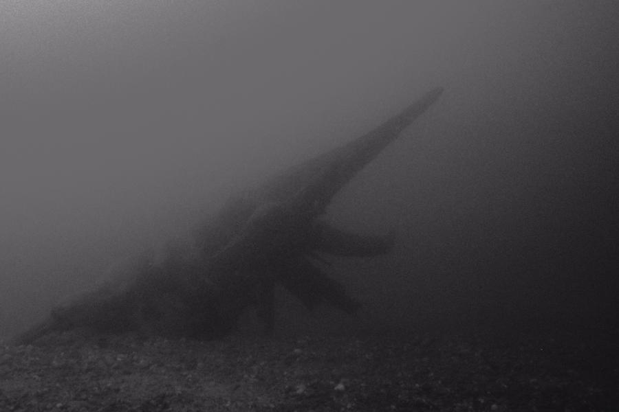Arbosaurus submarinis L.