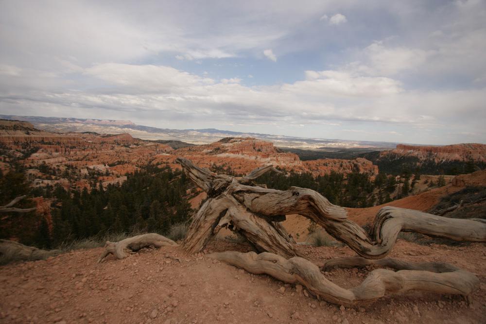 """""""Arbre"""" - Bryce Canyon"""