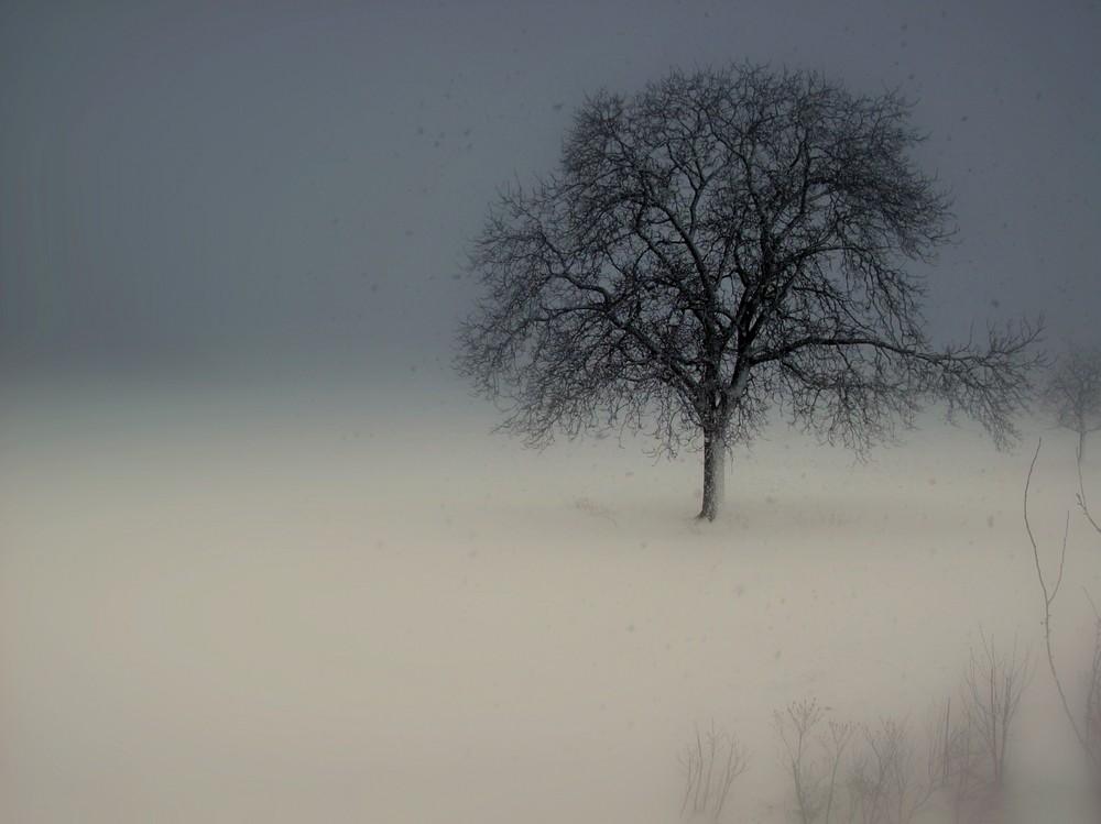 Arbre solitaire dans le froid