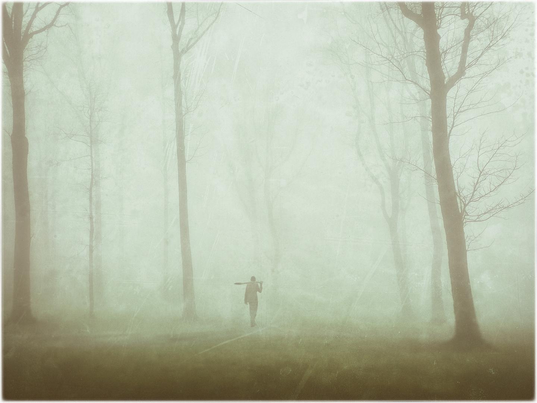 Arbres à brouillard
