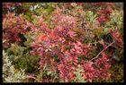 arbuste multicolores !
