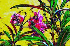 Arbusto, Adelphas, en primavera