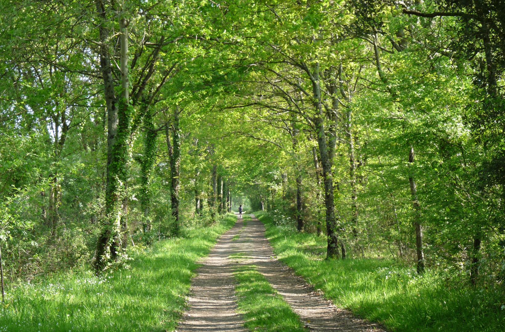Arc de verdure. photo et image | paysages, paysages de ...