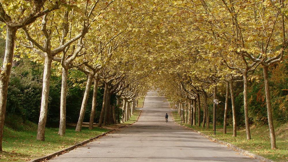 Arche...Herbst
