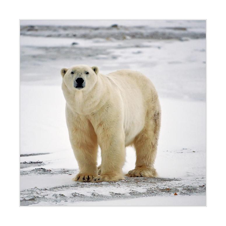 [ Arctic Canada ]