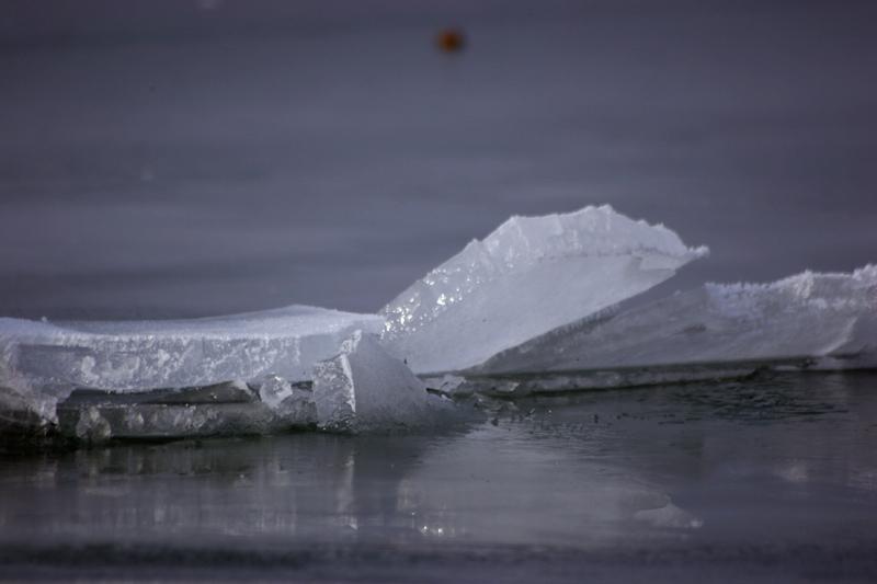 *arctico*