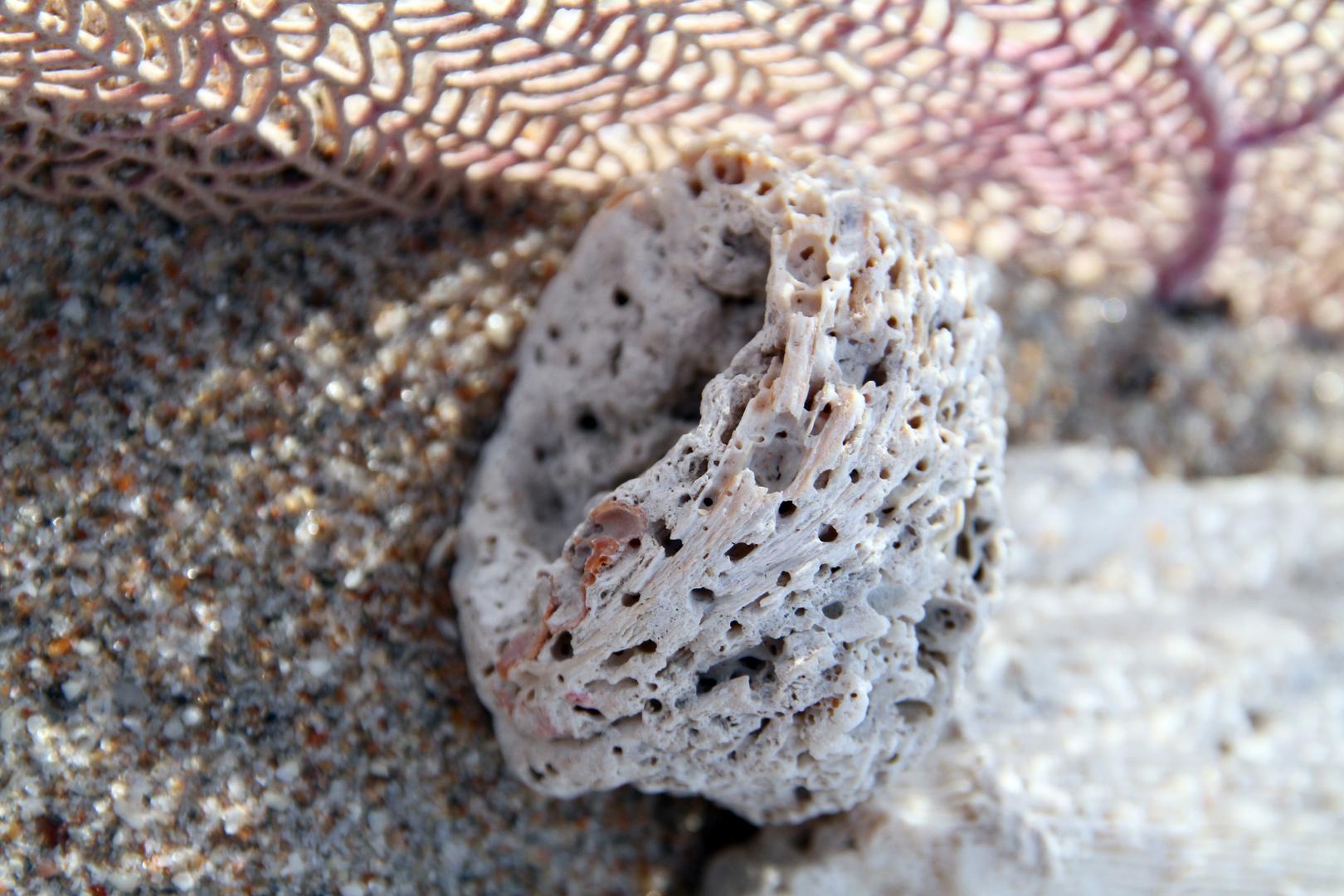 Arena, concha y coral
