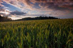 Argovia Landscape