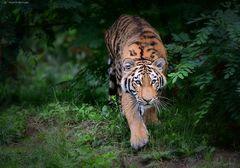 Arila im Jungle