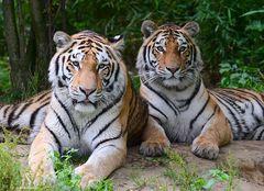 Arila & Makar im Duisburger Zoo