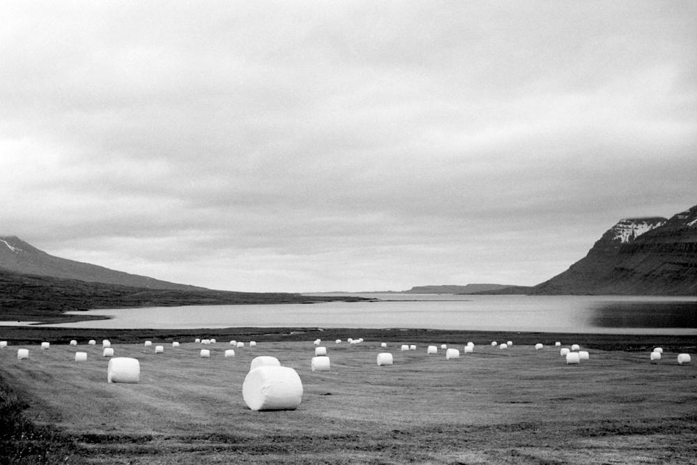 Arktische Ernte
