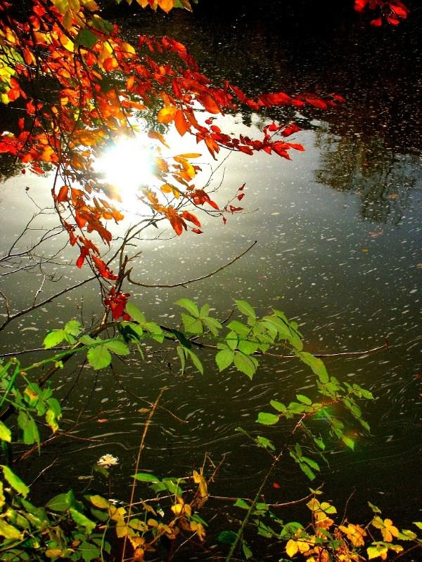 Arlequin d'automne