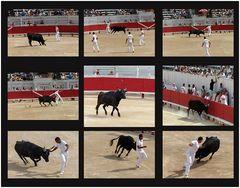 Arles - Amphitheater - Der Stier Nr. 1 und die Toreros