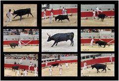 Arles - Amphitheater - Der Stier Nr. 2 und die Toreros