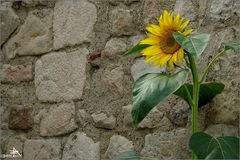 Arles - Dos au mur