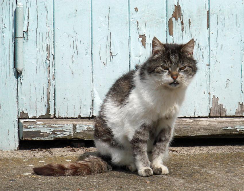 Arme kranke Katze