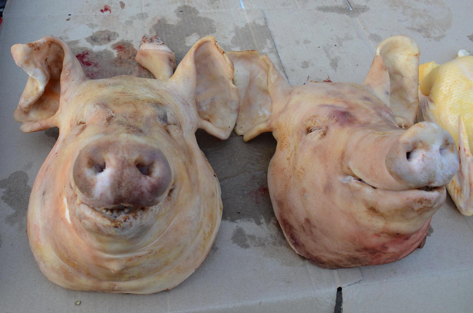 arme Schweine