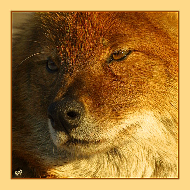 armer Hund II