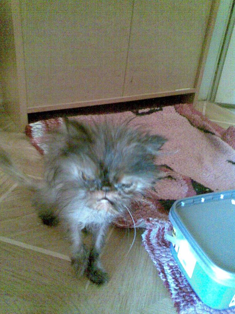 Armes Kätzchen