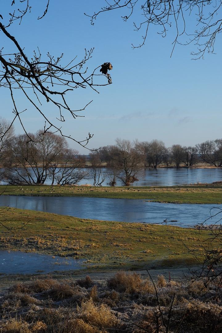 Arneburg - Elbe mit vereisten Elbauen