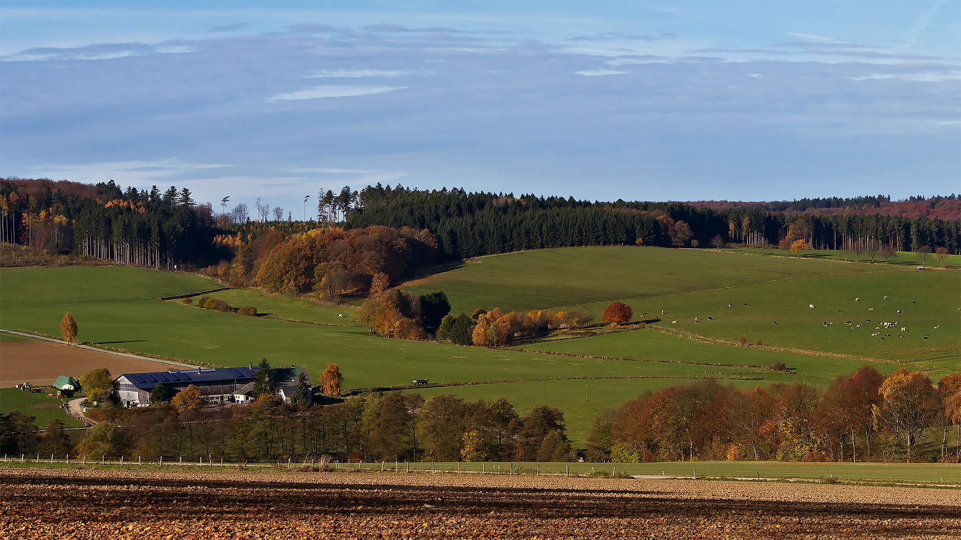 Arnsberger-Wald 001