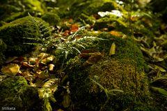 .....aromas de otoño....sensaciones para todos vosotros.